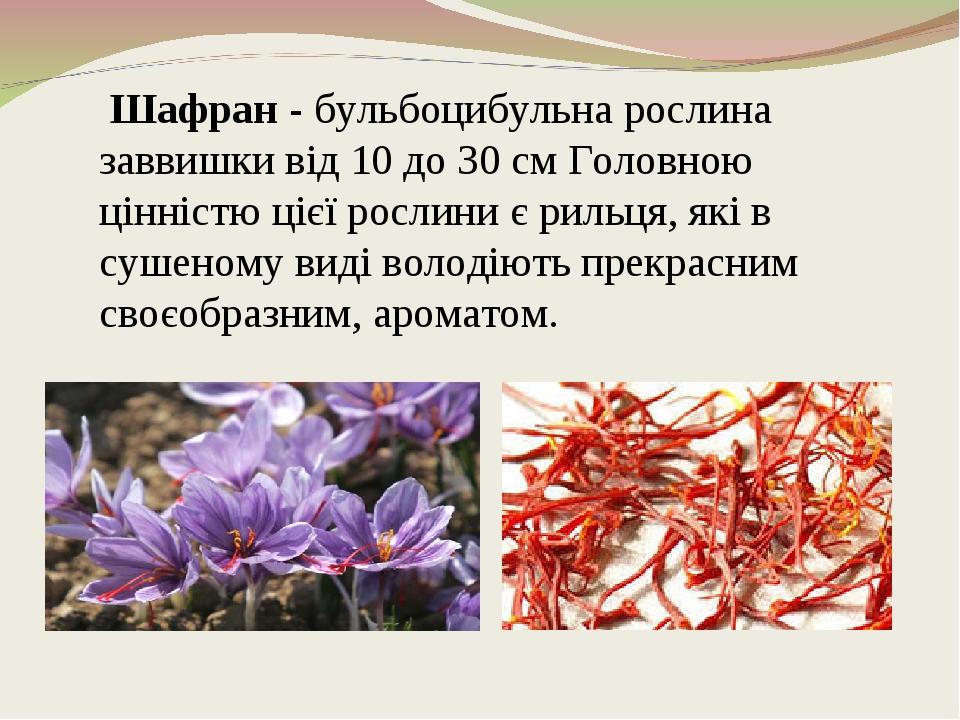 Шафран - бульбоцибульна рослина заввишки від 10 до 30 см Головною цінністю цієї рослини є рильця, які в сушеному виді володіють прекрасним своєобра...