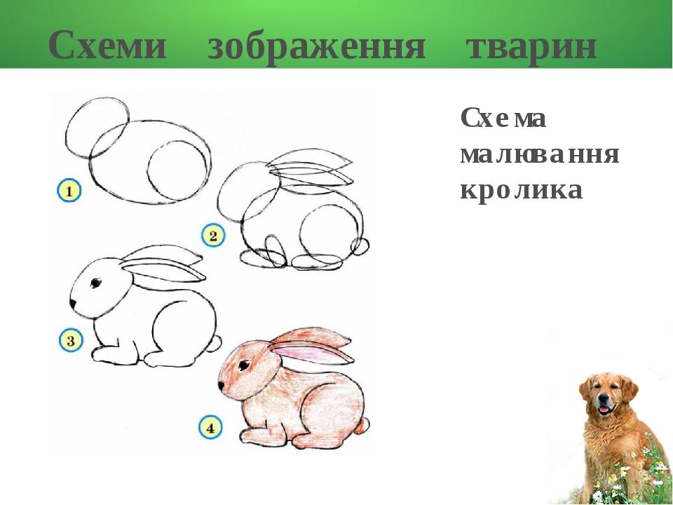 Схеми зображення тварин Схема малювання кролика
