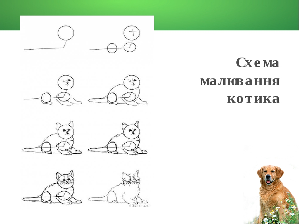 Схема малювання котика
