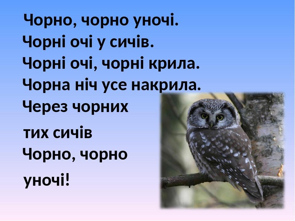 Чорно, чорно уночі. Чорні очі у сичів. Чорні очі, чорні крила. Чорна ніч усе накрила. Через чорних тих сичів Чорно, чорно уночі!