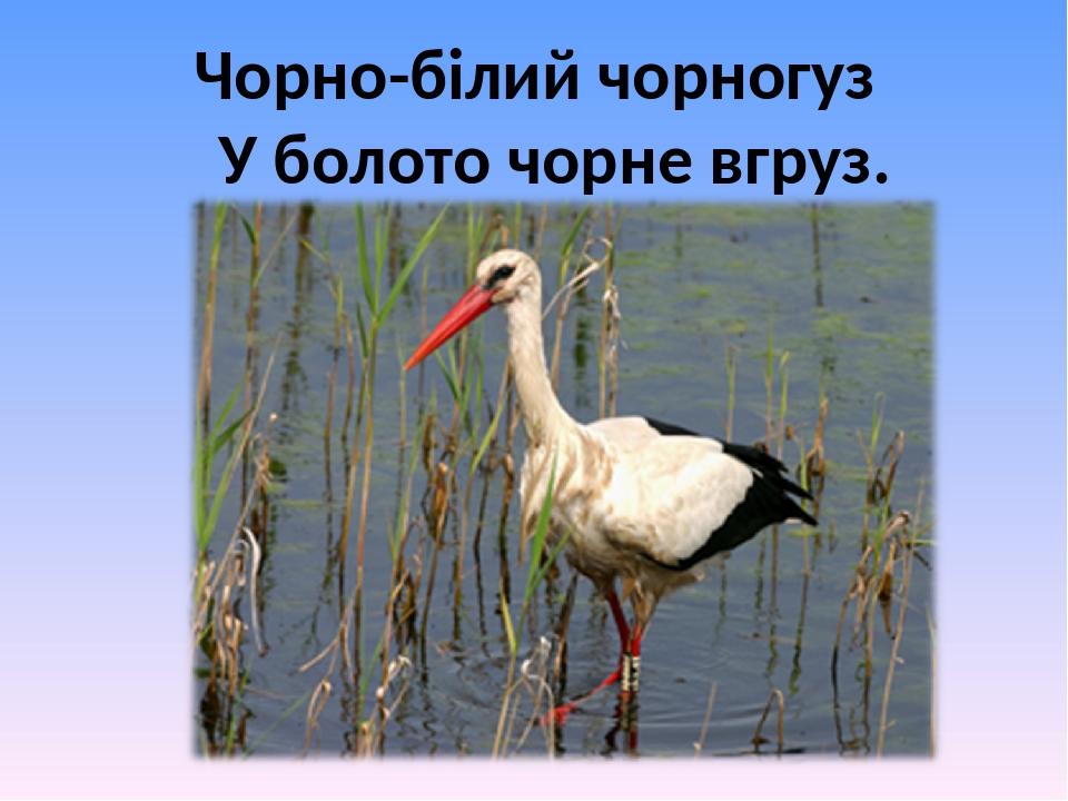Чорно-білий чорногуз У болото чорне вгруз.