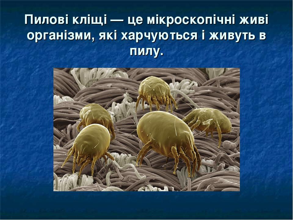 Пилові кліщі — це мікроскопічні живі організми, які харчуються і живуть в пилу.