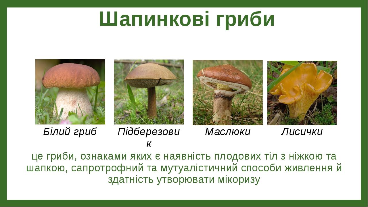 Шапинкові гриби це гриби, ознаками яких є наявність плодових тіл з ніжкою та шапкою, сапротрофний та мутуалістичний способи живлення й здатність ут...