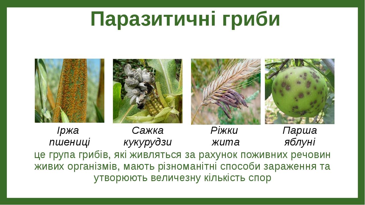 Паразитичні гриби це група грибів, які живляться за рахунок поживних речовин живих організмів, мають різноманітні способи зараження та утворюють ве...