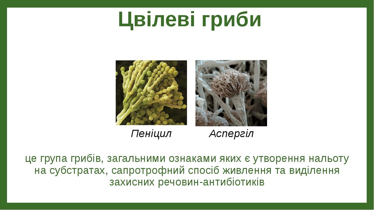 Цвілеві гриби це група грибів, загальними ознаками яких є утворення нальоту на субстратах, сапротрофний спосіб живлення та виділення захисних речов...
