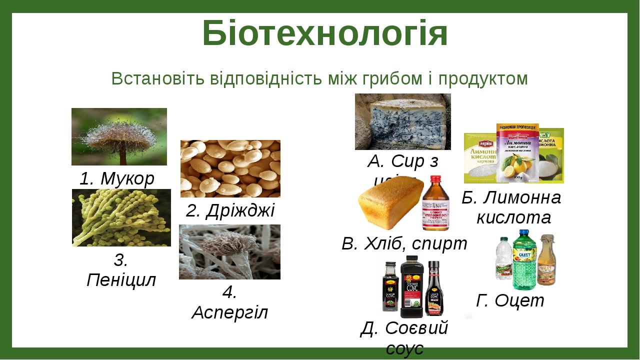 Біотехнологія Встановіть відповідність між грибом і продуктом 1. Мукор 2. Дріжджі 3. Пеніцил 4. Аспергіл В. Хліб, спирт Д. Соєвий соус Г. Оцет Б. Л...