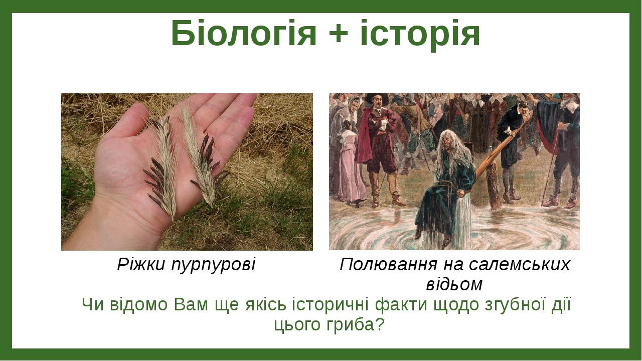 Біологія + історія Чи відомо Вам ще якісь історичні факти щодо згубної дії цього гриба? Ріжки пурпурові Полювання на салемських відьом