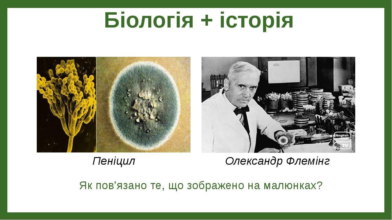 Біологія + історія Як пов'язано те, що зображено на малюнках? Пеніцил Олександр Флемінг