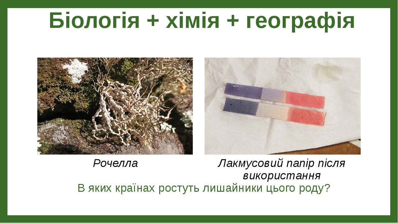Біологія + хімія + географія В яких країнах ростуть лишайники цього роду? Рочелла Лакмусовий папір після використання