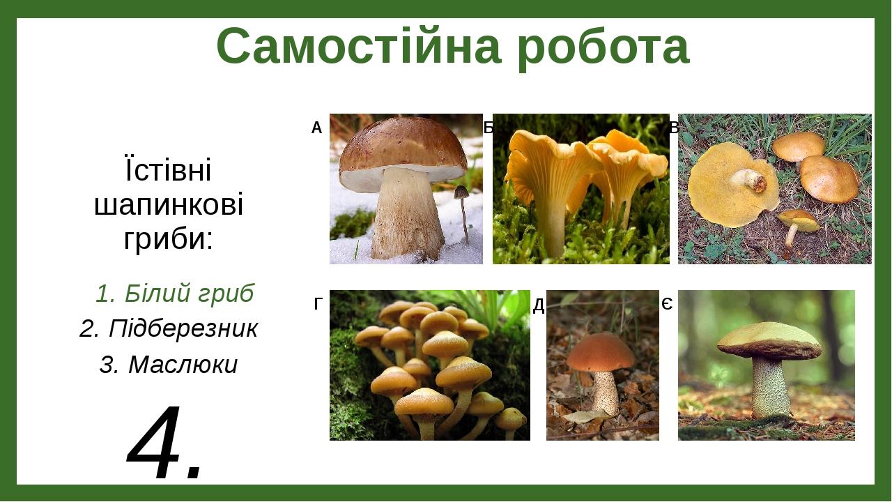 Самостійна робота 1. Білий гриб 2. Підберезник 3. Маслюки 4. Підосичник 5. Лисички 6. Опеньки літні Їстівні шапинкові гриби: А Б В Г Д Є