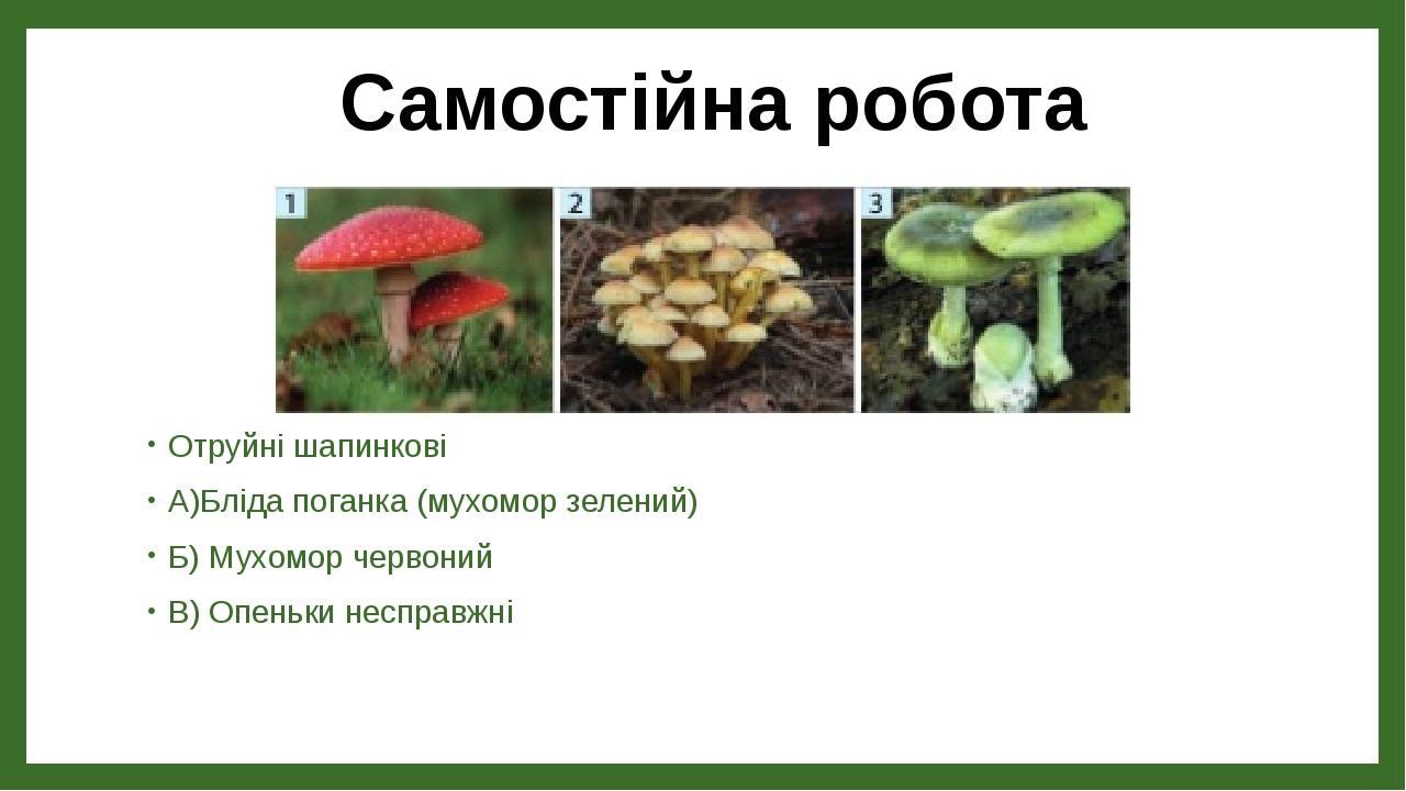 Отруйні шапинкові А)Бліда поганка (мухомор зелений) Б) Мухомор червоний В) Опеньки несправжні Самостійна робота