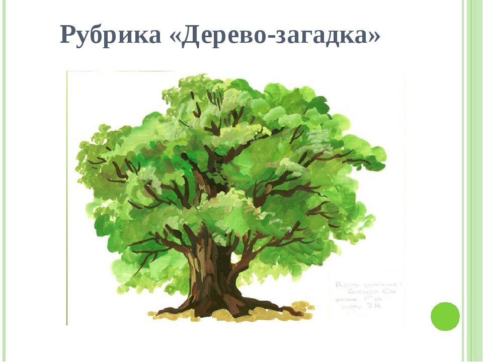 японки дерево загадок картинки под