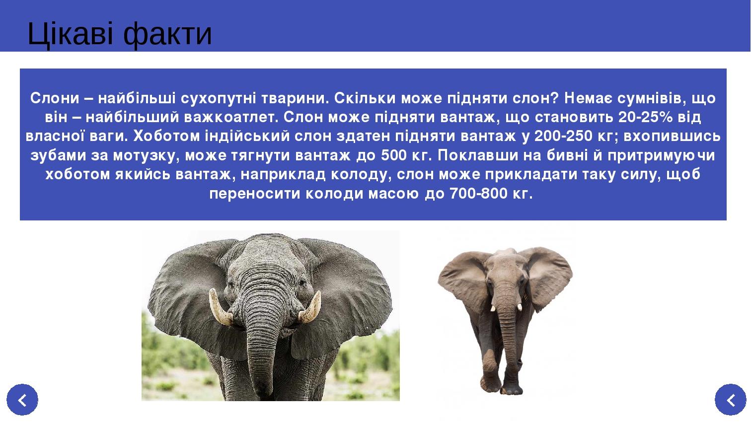 Цікаві факти Слони – найбільші сухопутні тварини. Скільки може підняти слон? Немає сумнівів, що він – найбільший важкоатлет. Слон може підняти вант...
