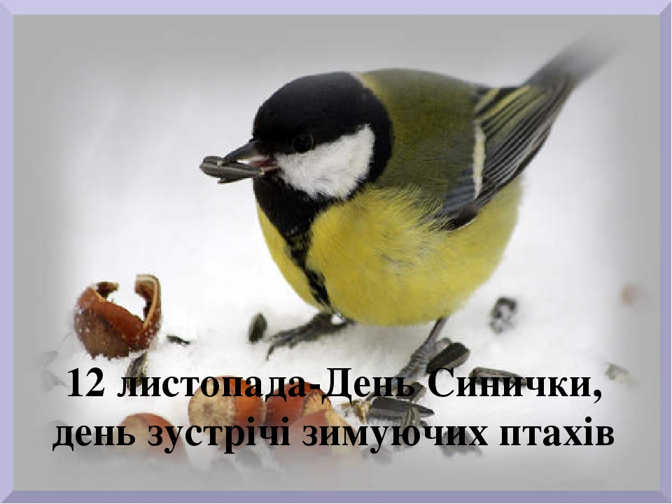 12 листопада-День Синички, день зустрічі зимуючих птахів