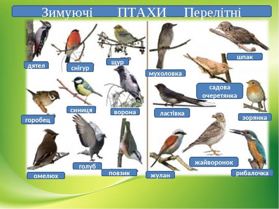 Птахи, які мешкають у Черкаські області