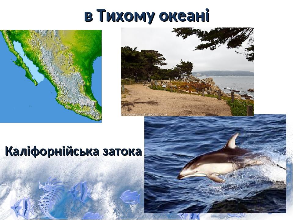 в Тихому океані Каліфорнійська затока