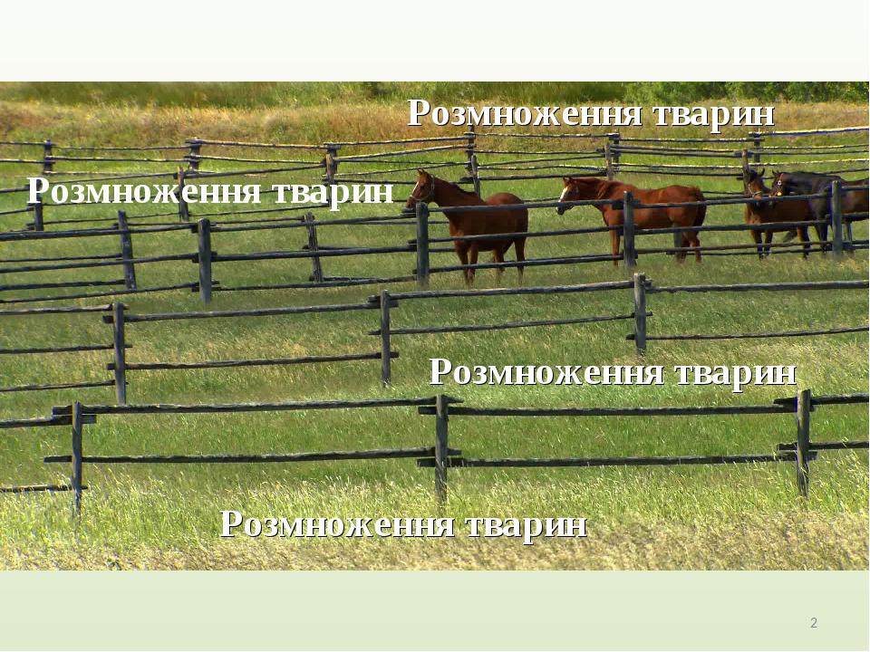 Розмноження тварин Розмноження тварин Розмноження тварин Розмноження тварин *