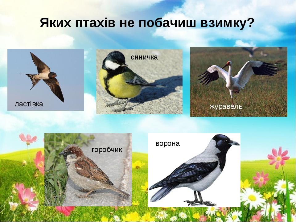 """Презентація для дітей старшої групи """"Птахи прилетіли!"""""""