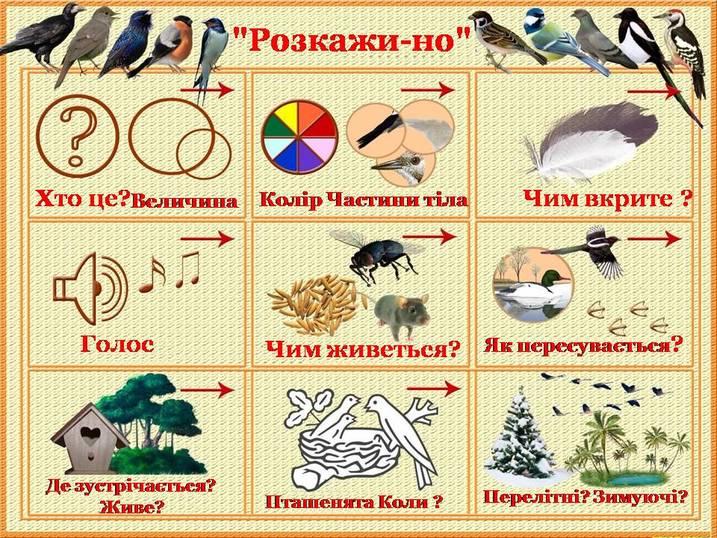 Мнемотаблиця плакат для опису птахів