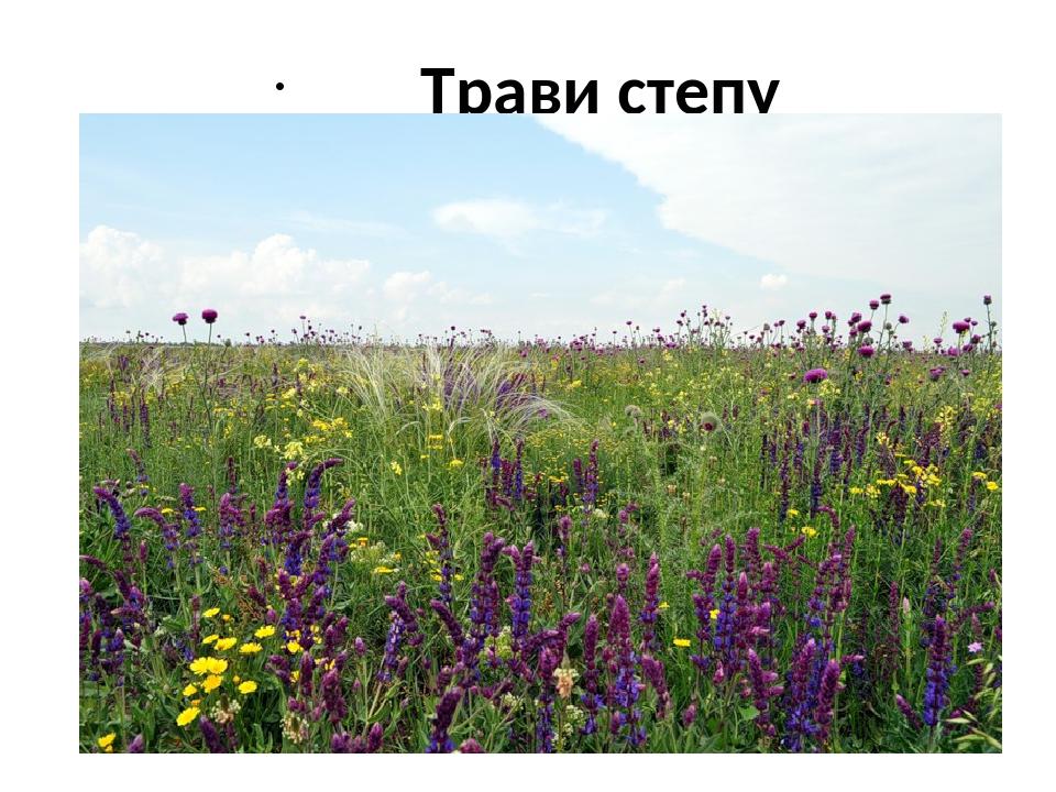 Трави степу