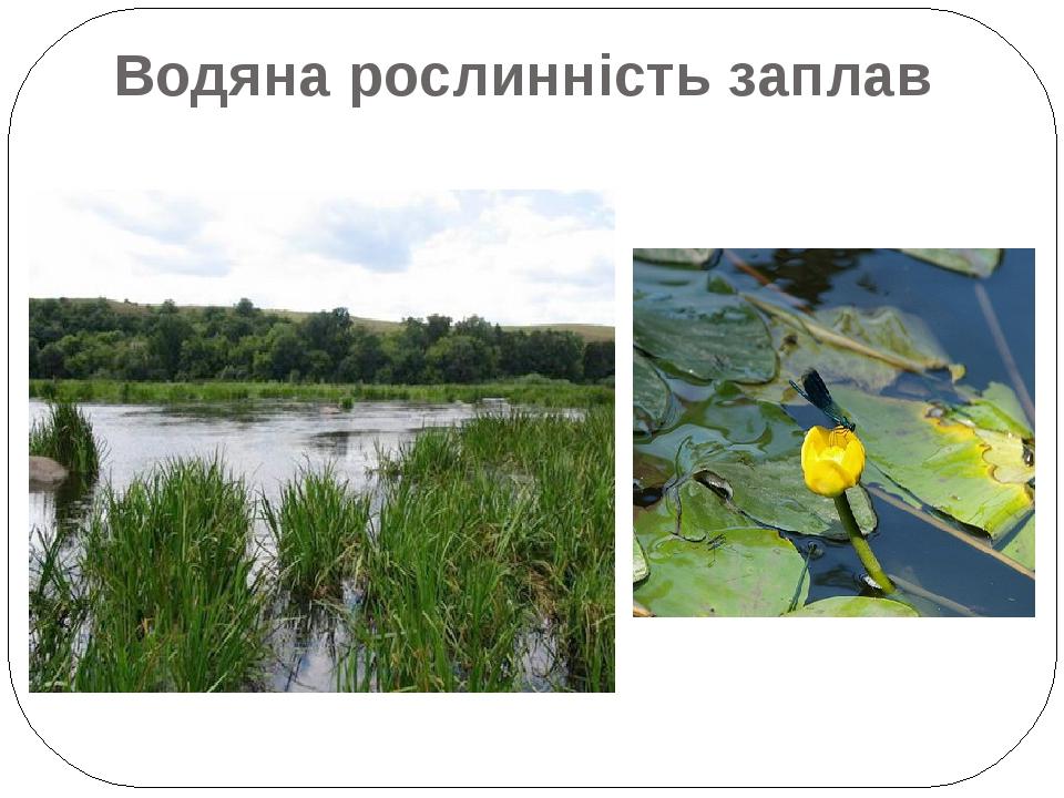 Водяна рослинність заплав