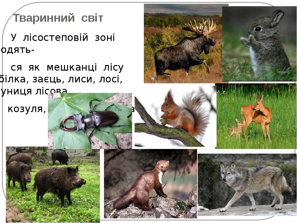 Тваринний світ У лісостеповій зоні водять- ся як мешканці лісу (білка, заєць, лиси, лосі, куниця лісова, козуля, кабан, вовк), так і степові види.