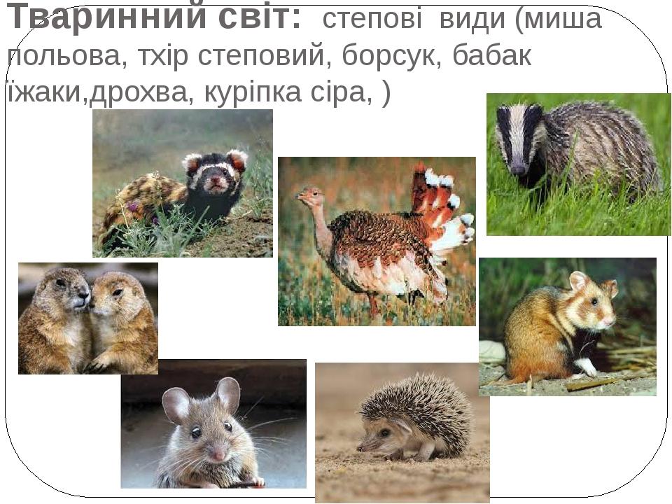 Тваринний світ: степові види (миша польова, тхір степовий, борсук, бабак їжаки,дрохва, куріпка сіра, )