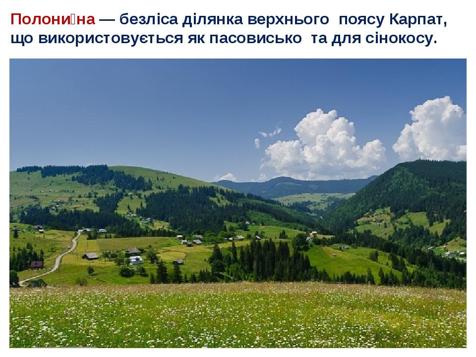 Полони́на— безліса ділянка верхнього поясу Карпат, що використовується як пасовисько та для сінокосу.