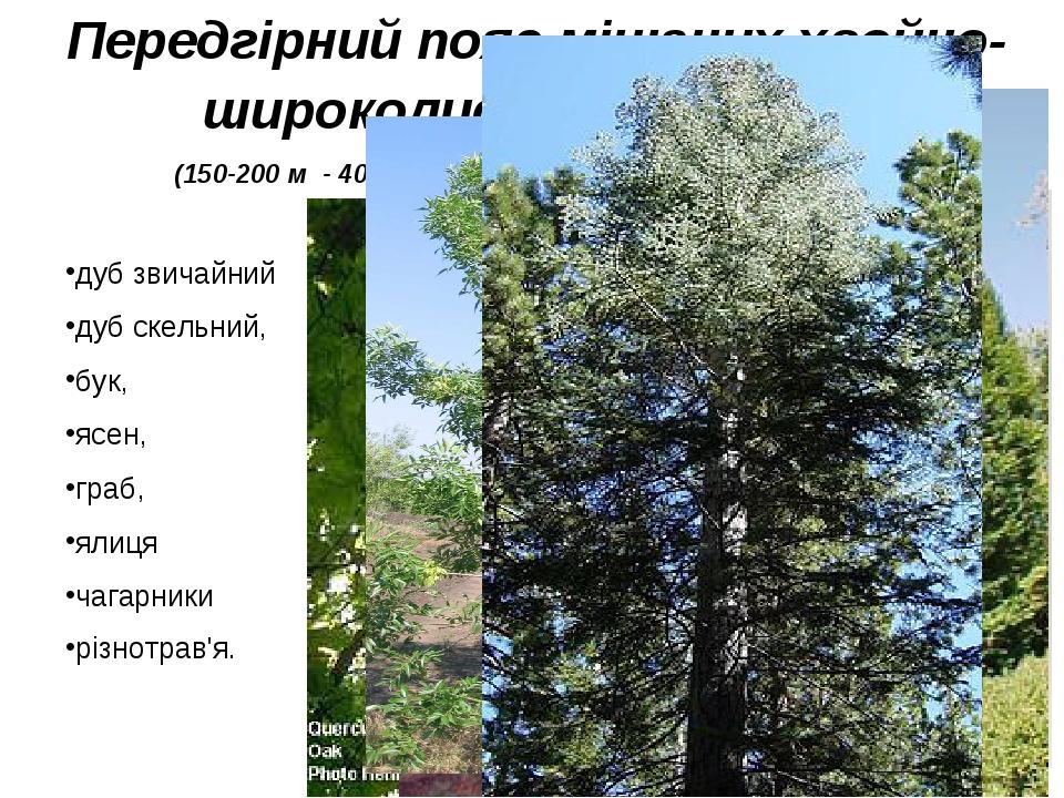 Передгірний пояс мішаних хвойно-широколистих лісів і лук (150-200 м - 400-600 м.) Грунти - дерново-підзолисті дуб звичайний дуб скельний, бук, ясен...