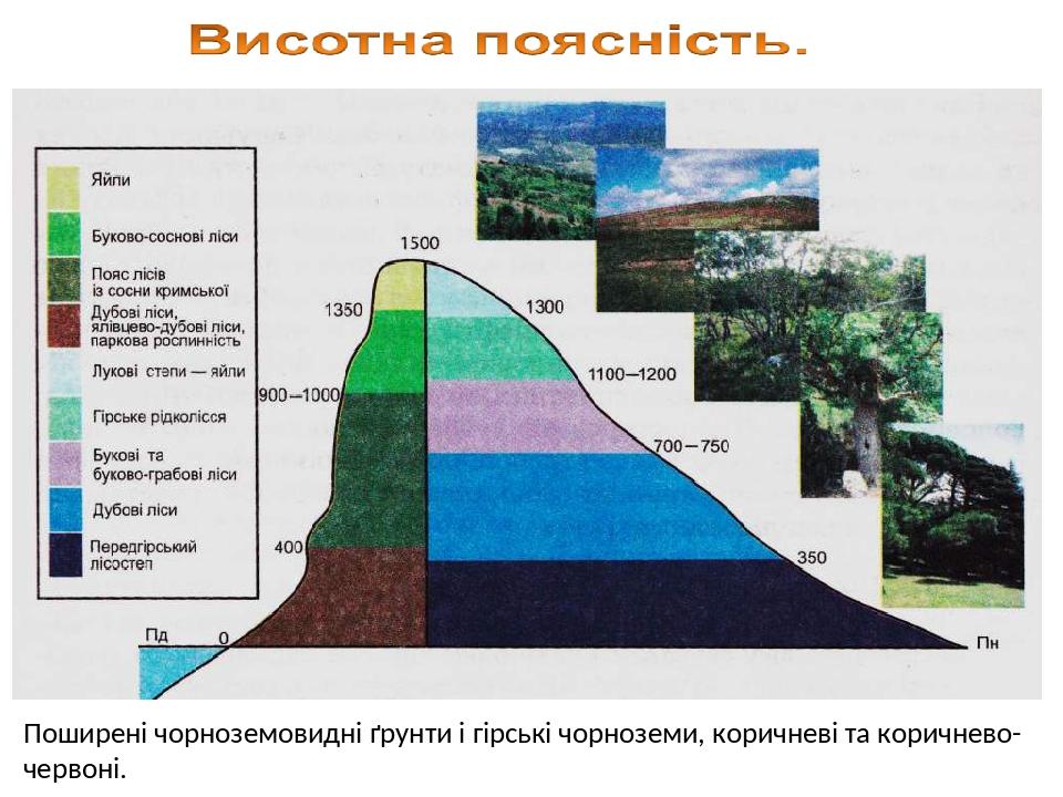 Поширені чорноземовидні ґрунти і гірські чорноземи, коричневі та коричнево-червоні.