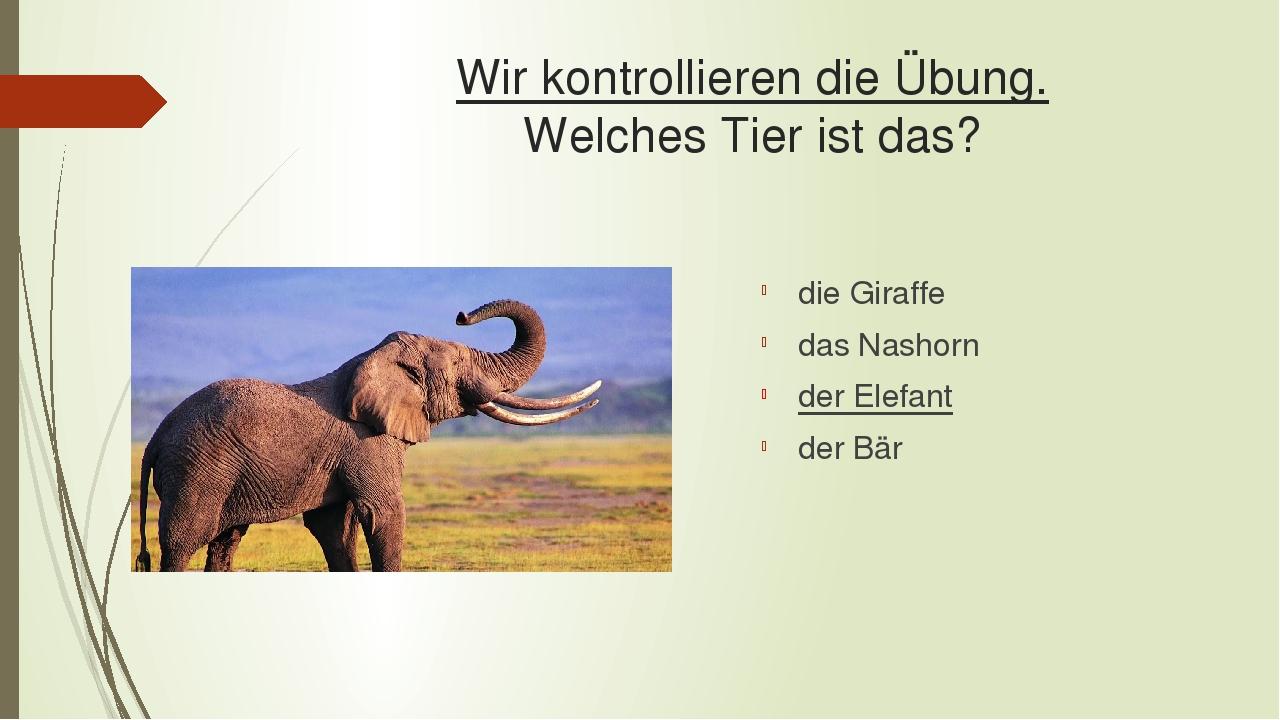Wir kontrollieren die Übung. Welches Tier ist das? die Giraffe das Nashorn der Elefant der Bär