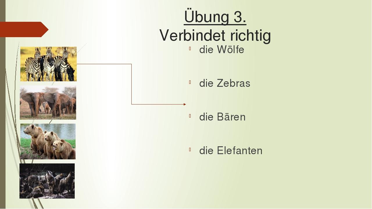 Übung 3. Verbindet richtig die Wölfe die Zebras die Bären die Elefanten