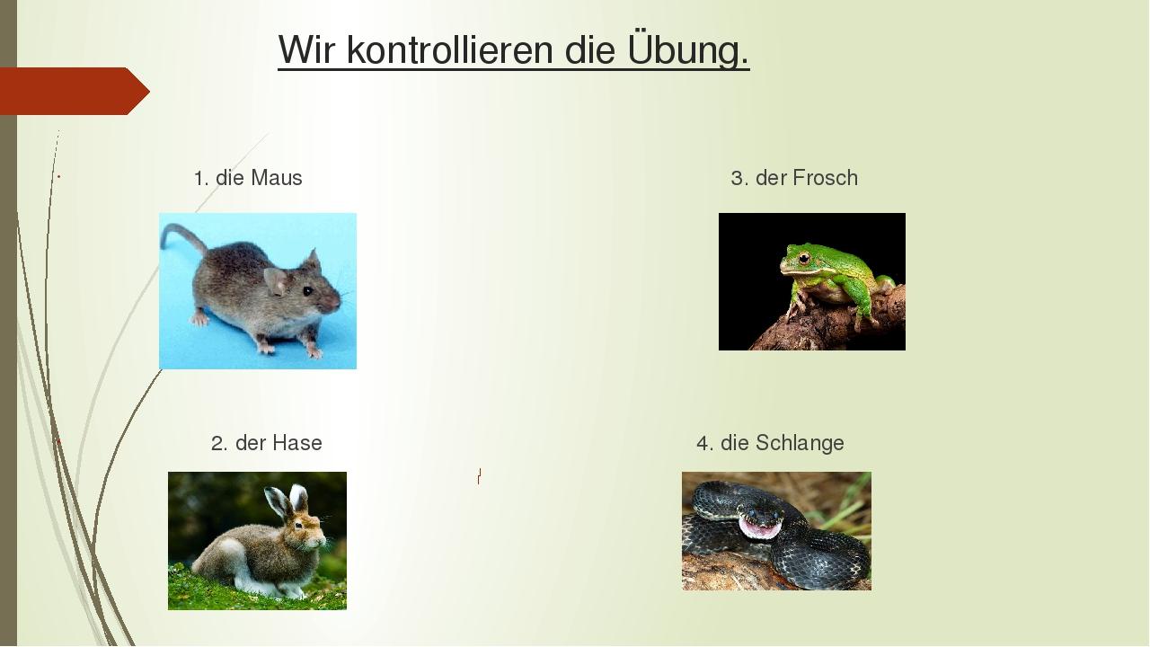 Wir kontrollieren die Übung. 1. die Maus 3. der Frosch 2. der Hase 4. die Schlange