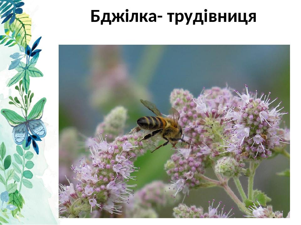 Бджілка- трудівниця