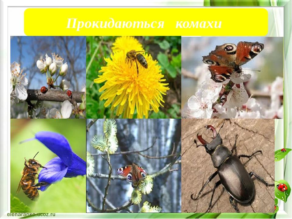 Прокидаються комахи