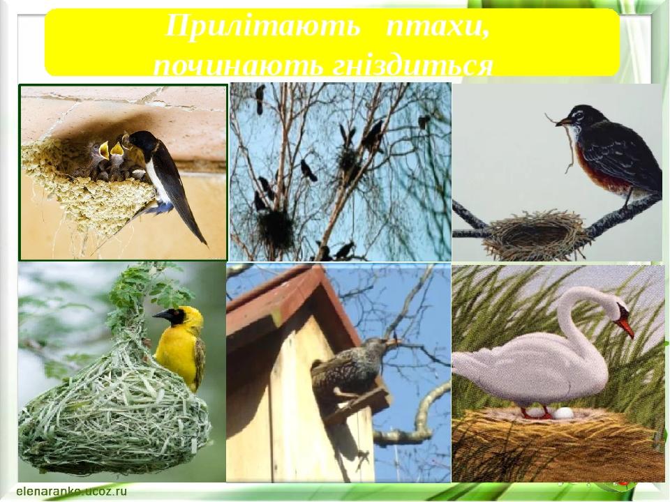 Прилітають птахи, починають гніздиться