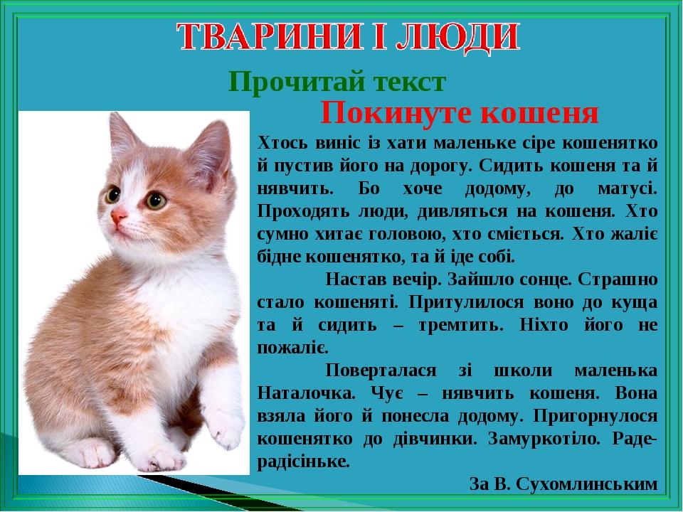 Прочитай текст Покинуте кошеня Хтось виніс із хати маленьке сіре кошенятко й пустив його на дорогу. Сидить кошеня та й нявчить. Бо хоче додому, до ...