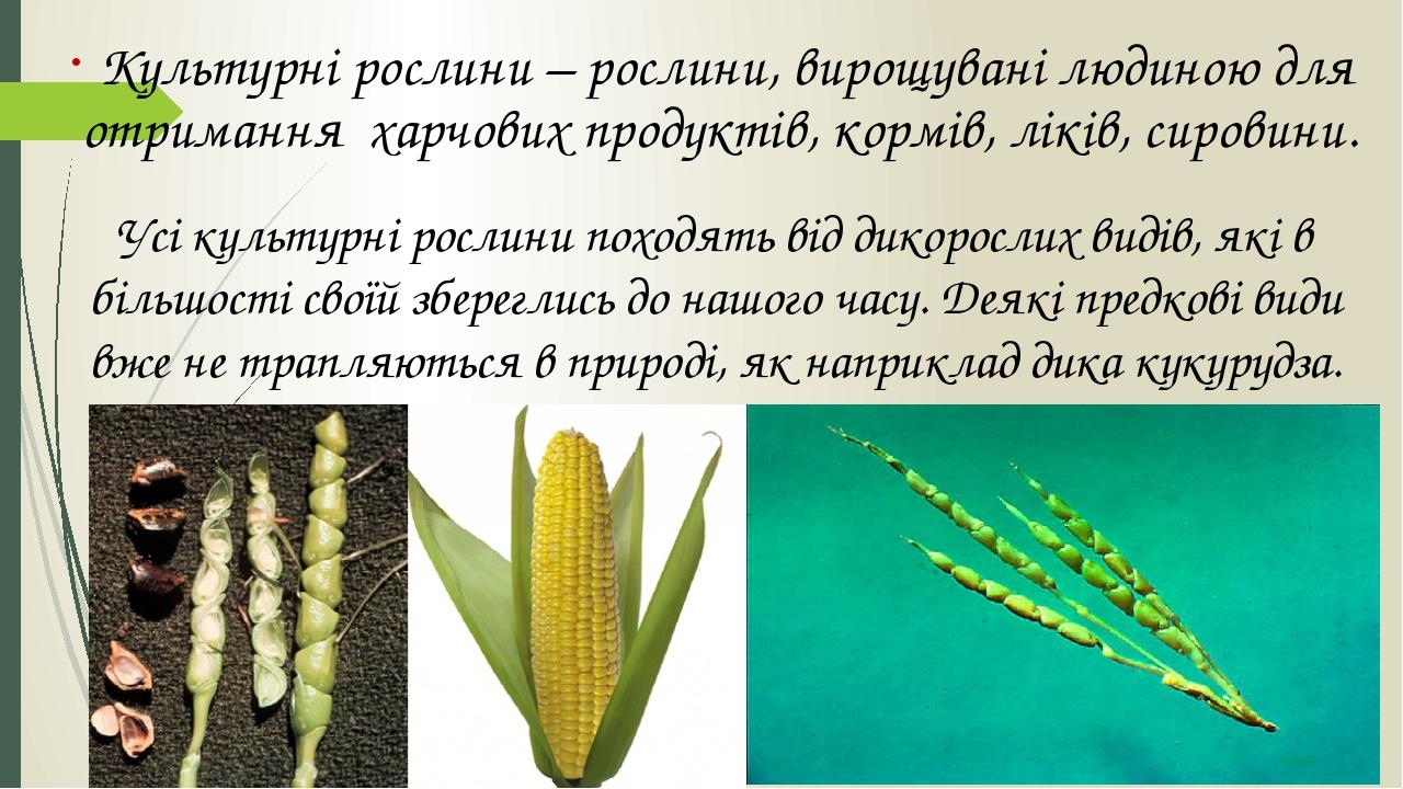 Культурні рослини – рослини, вирощувані людиною для отримання харчових продуктів, кормів, ліків, сировини. Усі культурні рослини походять від дикор...