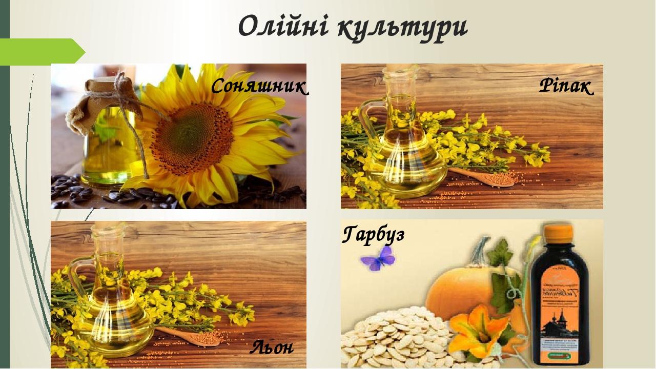 Олійні культури Ріпак Соняшник Льон Гарбуз