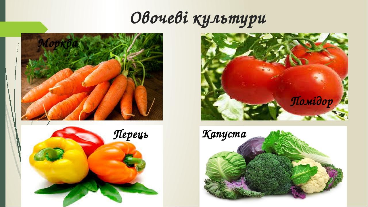Овочеві культури Морква Помідор Перець Капуста