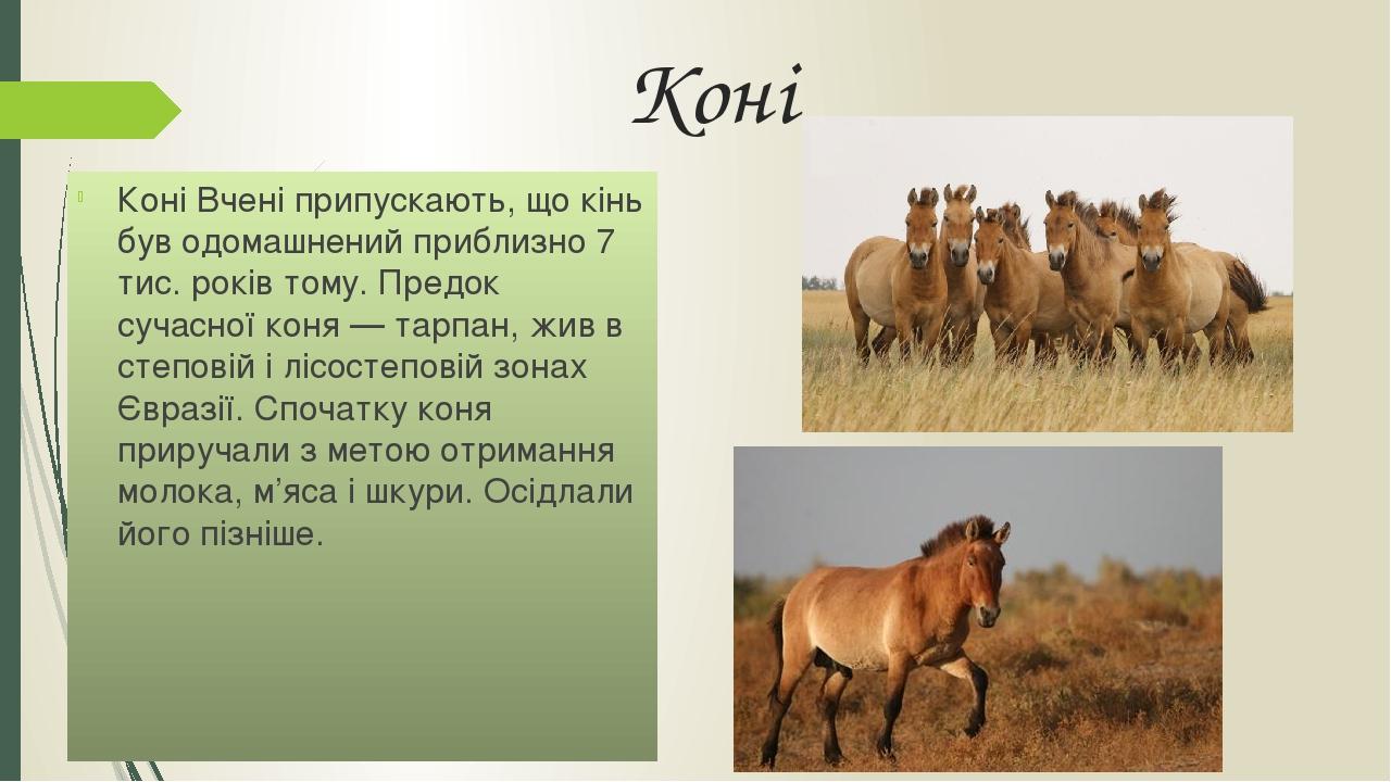Коні Коні Вчені припускають, що кінь був одомашнений приблизно 7 тис. років тому. Предок сучасної коня — тарпан, жив в степовій і лісостеповій зона...