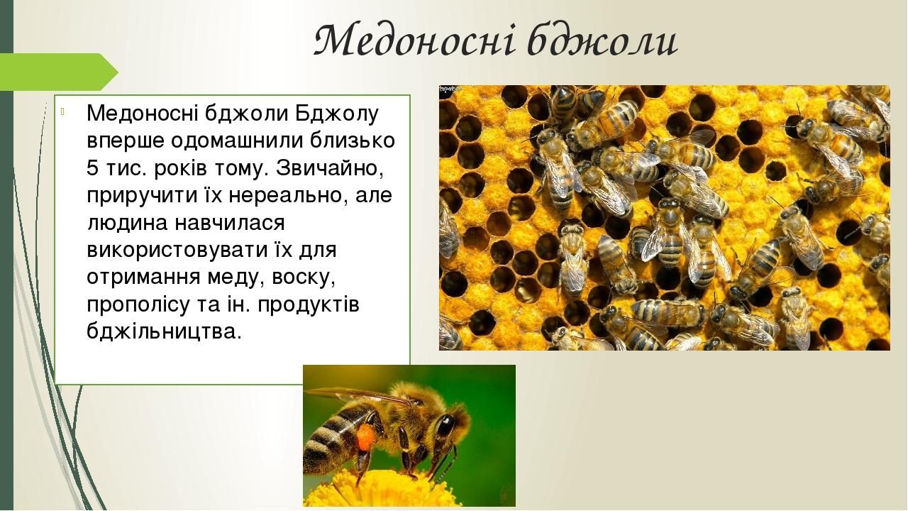 Медоносні бджоли Медоносні бджоли Бджолу вперше одомашнили близько 5 тис. років тому. Звичайно, приручити їх нереально, але людина навчилася викори...