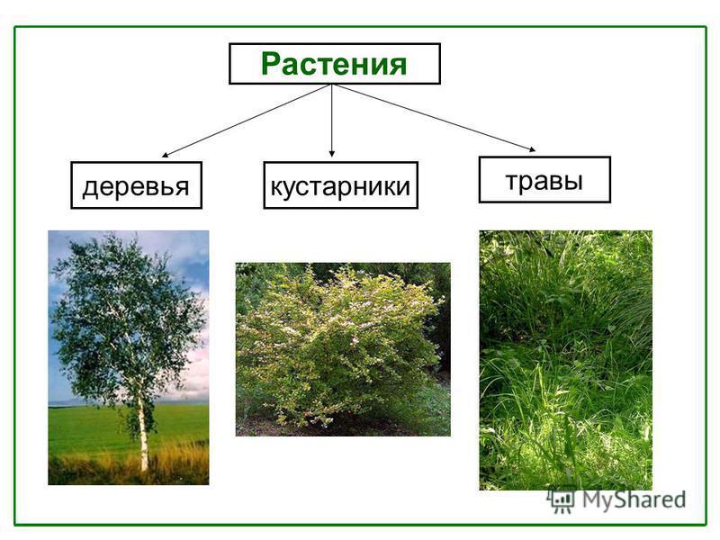 предусматривает картинки групп растений деревья кустарники и травы что-то, извлекаем информацию