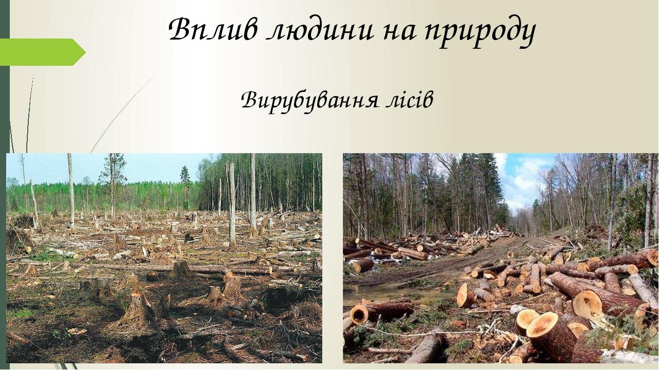 Вплив людини на природу Вирубування лісів