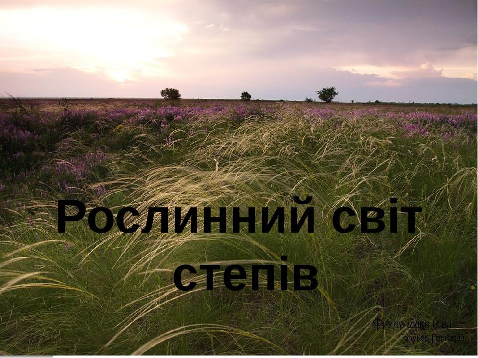 Рослинний світ степів