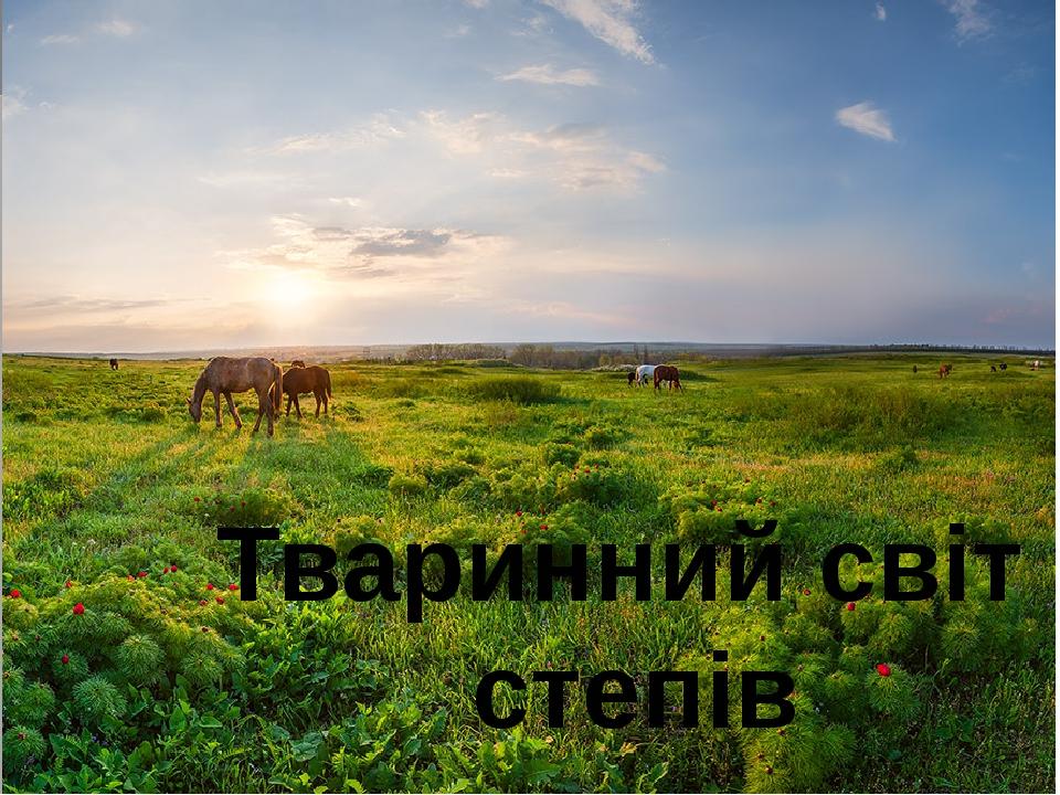 Тваринний світ степів