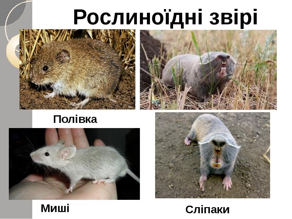 Рослиноїдні звірі Миші Сліпаки Полівка