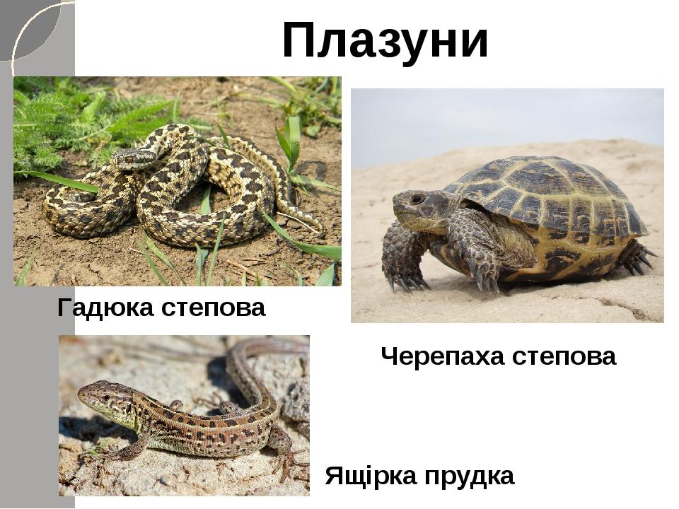 Плазуни Гадюка степова Ящірка прудка Черепаха степова