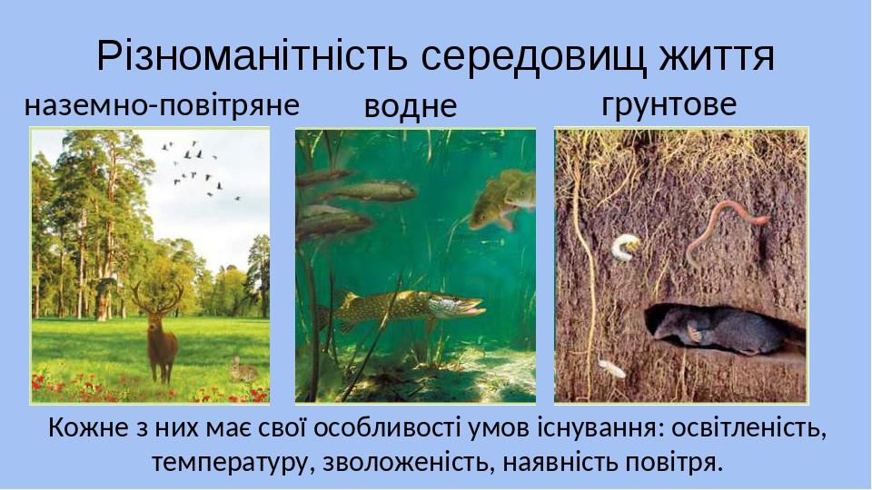 Різноманітність середовищ життя наземно-повітряне Кожне з них має свої особливості умов існування: освітленість, температуру, зволоженість, наявніс...