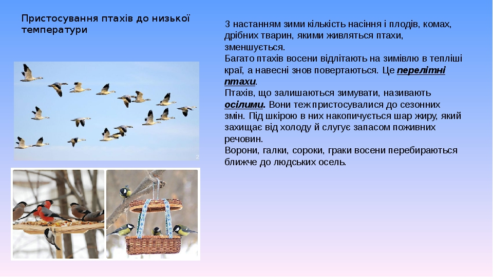 Пристосування птахів до низької температури З настанням зими кількість насіння і плодів, комах, дрібних тварин, якими живляться птахи, зменшується....